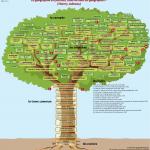 L'arbre de la géographie par François Arnal
