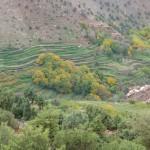 cultures en automne haut atlas maroc