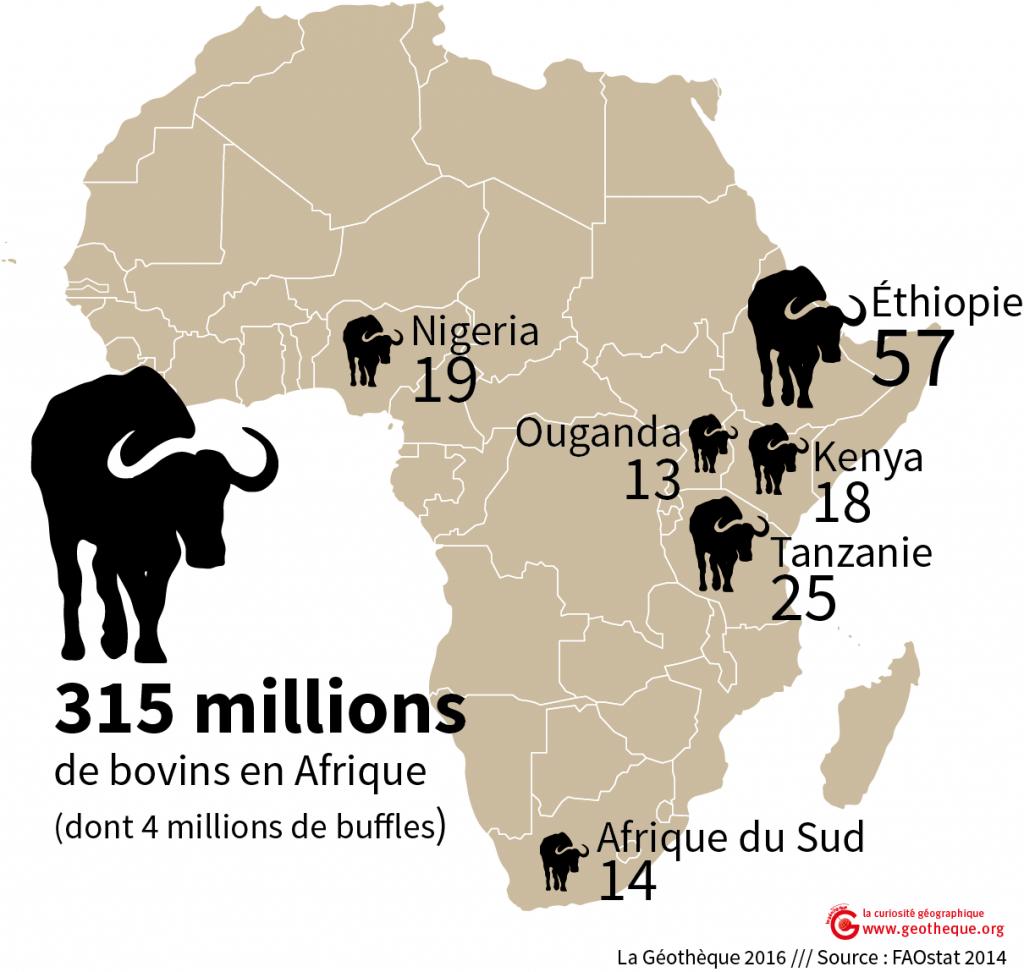 Afrique-bovins
