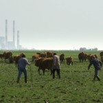 Prairie et Usine - Image tirée du film